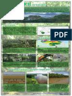 Infografia Selva Tropical Nelson Moreno