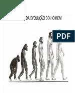 Gráfico Da Evolução Do Homem