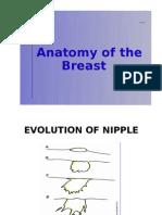 Anatomy of the Breast (breastfeeding)
