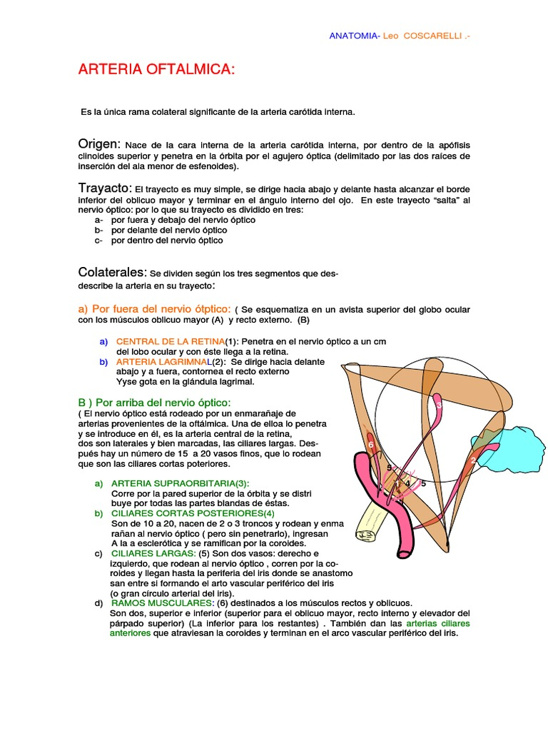 Arteria Oftalmica