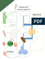 cuadro biologia.docx