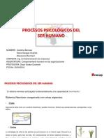 Procesos Spicologicos