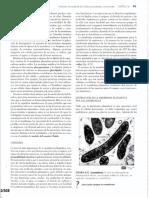 Funciones de La Membrana Plasmatica