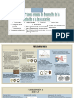 Karla Hernandez Fecundacion Embriologia