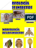 Morfología de Insectos