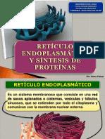 Reticulo Endoplasmatico