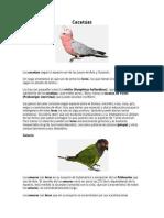 proyecto ambiental pajarera