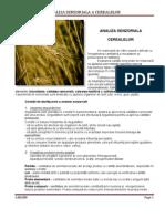 Analiza Senzoriala a Cerealelor