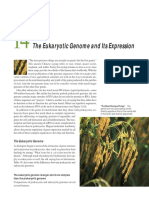 chap14The Eukaryotic Genome and Its Expression.pdf