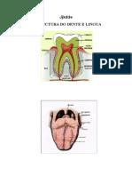 enfermedades+digestivo+farpdf