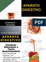 07- APARATO DIGESTIVO