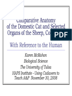 Cat & Human Anatomy.pdf