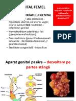 18_PATOLOGIE APARAT GENITAL.pdf