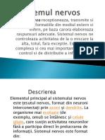 sistemulnervos-100518161421-phpapp02
