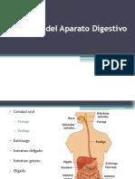 Fisiologc3ada Del Aparato Digestivo