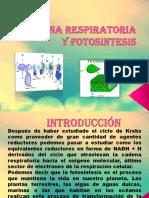 Cadena Respiratoria y Fotosintesis
