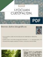 Ayocuan Cuetzpaltzin8