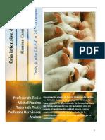 tesiscerdos-130505110544-phpapp01