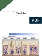 Glándulas. info.pdf