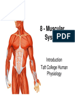 8 Muscular System Intro