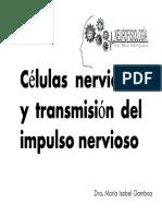 Celula Nerviosa, Transmisión Impulso Nervioso, Bibliografía