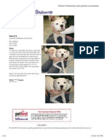 Bella on Petfinder (Giancarla Churchman Story)