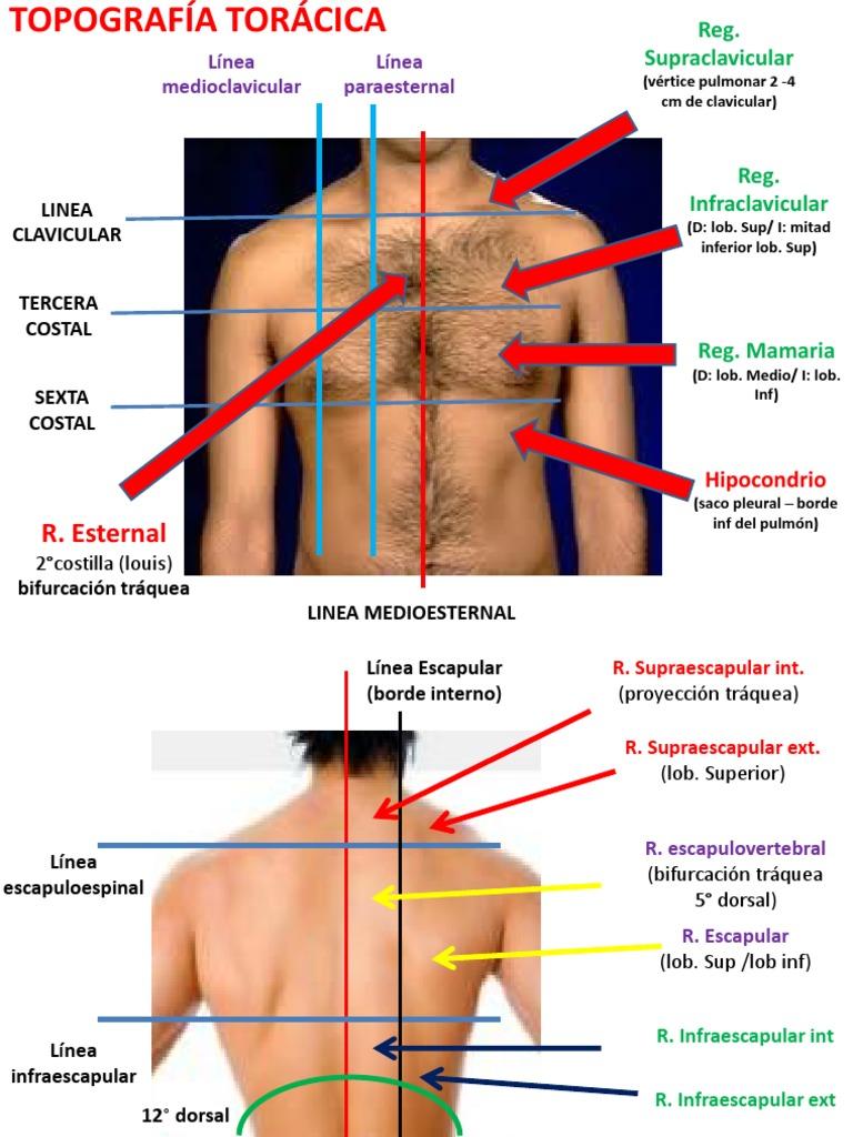Semilogia AP Respiratorio Copia