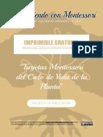 CM - Tarjetas 4 partes del Ciclo de Vida de la planta.pdf