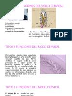 TIPOS Y FUNCIONES DEL MOCO CERVICAL.pptx