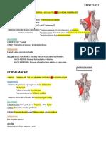 Músculos de La Columna Vertebral