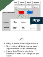 p53 and Adhesion