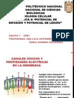 PRACTICA-4-FISIOLOGIA (1).pptx