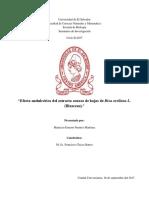 Efecto Antiulcérico Del Extracto Acuoso de Hojas de Achiote
