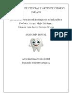 ARTICULACION ALVEOLO-DENTAL.docx