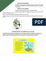 Qué Son Las Plantas 222222
