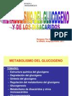 Metabolismo Del Glucogeno Upads 2017