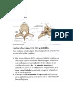 osteologia tx