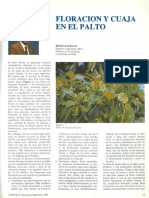 RazetoBruno1987 Floracion en Palto