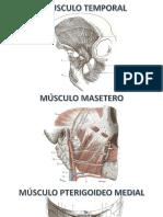 Musculos de Cabeza y Cara