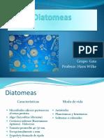 Diatomeas.pptx