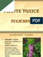 49. Tulichina