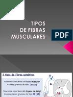Yo.fibras Musculares