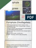 7790_79574_Pyyrophyta & Sea Grass.pdf