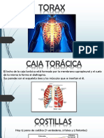 Torax Anatomia Radiologica