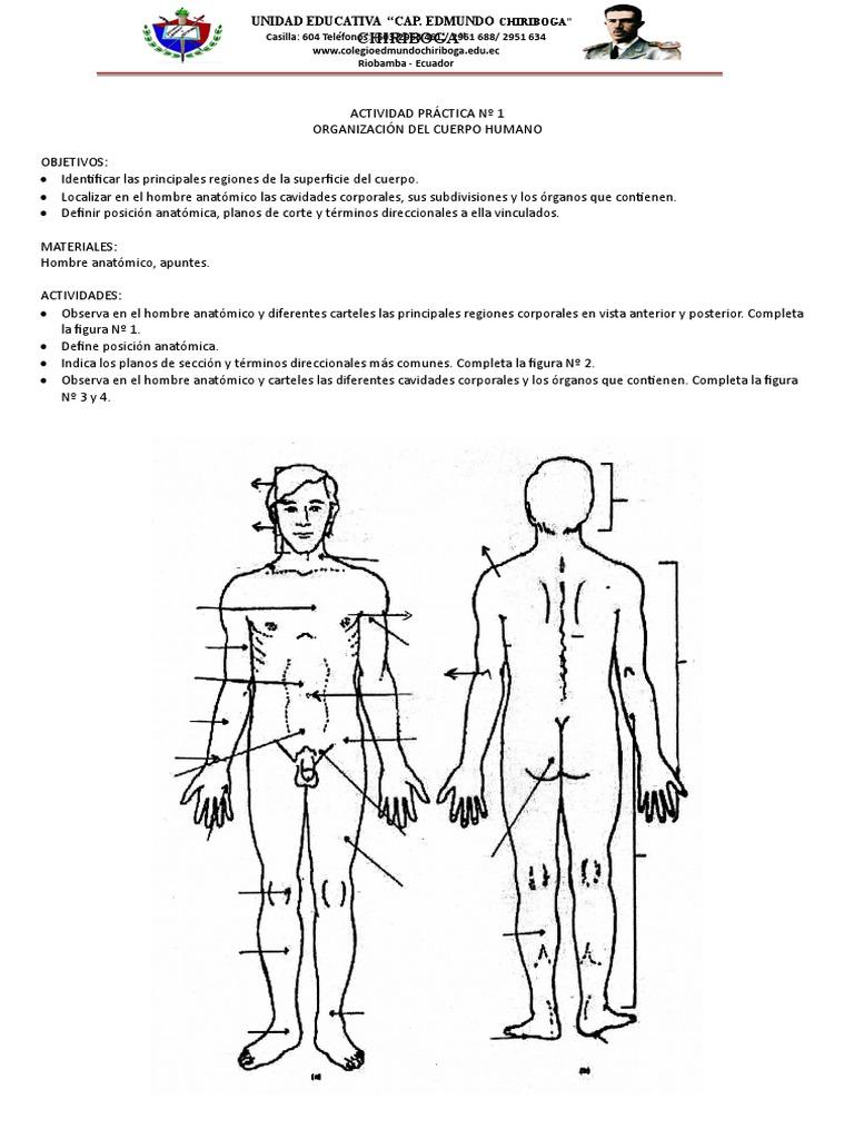 Actividad Práctica Nº 1 Anatomia