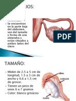 OVARIOS Y TROMPAS UTERINAS.pptx