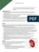 U5 Sistema renal.docx