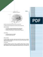 Defectos Glaucomatosos y Campo Visual (profe clara díaz)