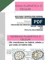 Membrana Plasmática y Transporte