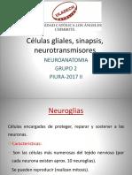 Células Gliales, Sinapsis, Neurotransmisores ANATOMIA